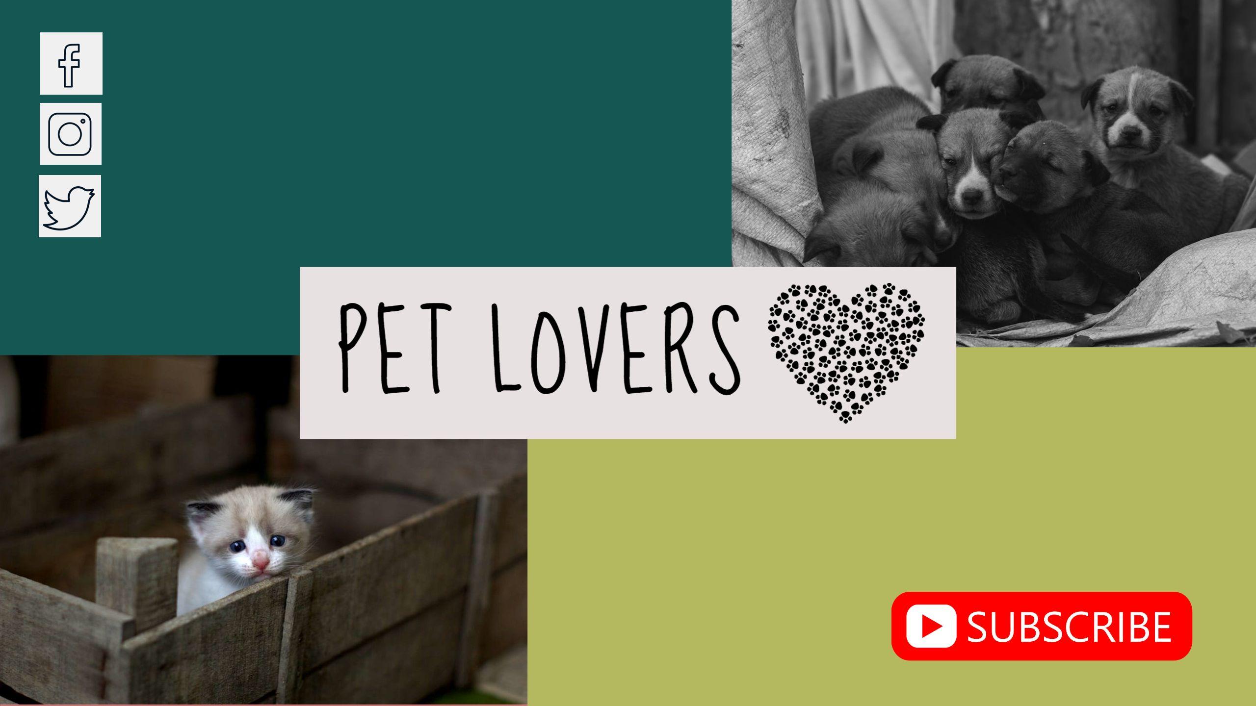 Pet Lovers Youtube Channel Art
