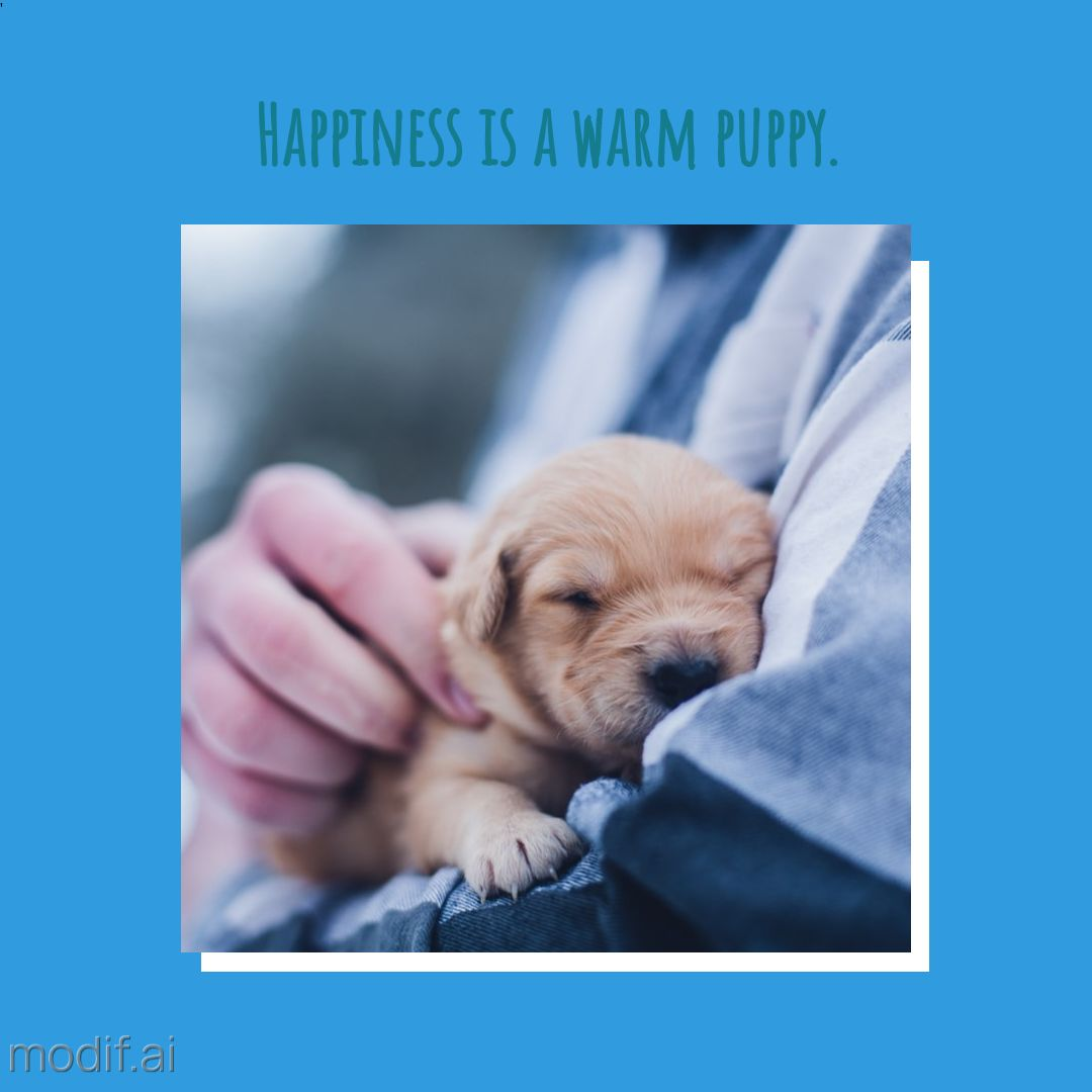 Happiness is a Warm Puppy Instagram Post